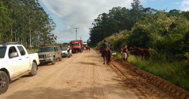 Cavalos soltos começam a ser recolhidos