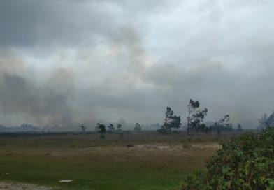 Bombeiros seguem em combate a incêndio em grande área em Quintão
